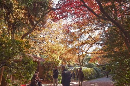 【写真】紅葉 : 大河内山荘
