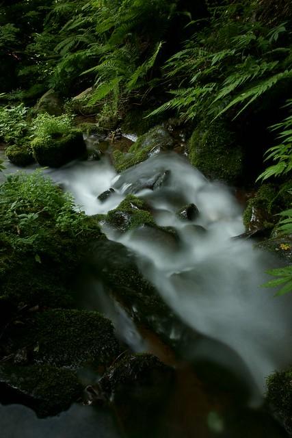 写真_深緑浴