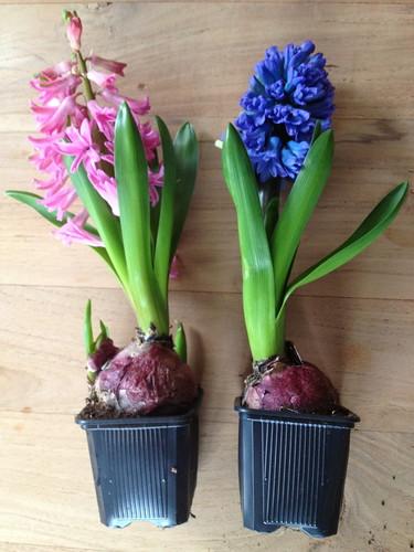 bloemen-boel2-768x1024