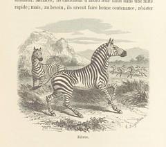 """British Library digitised image from page 255 of """"Le Désert et le Monde Sauvage ... Illustrations par Yan' D'argent, etc"""""""