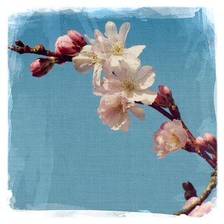 January blossoms