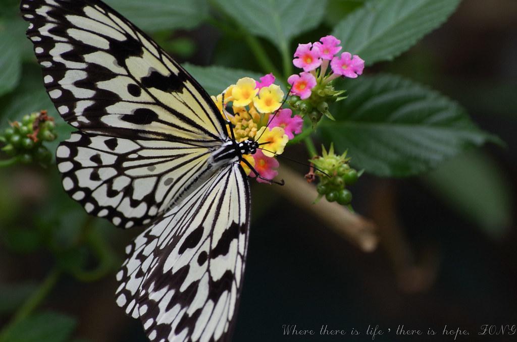 初心者拍蝴蝶