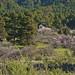 Al cobijo del gran pino