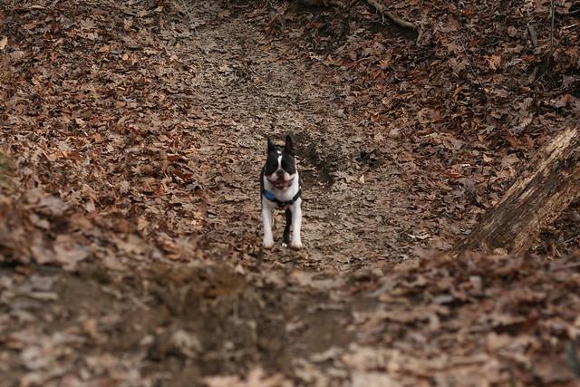 Charlie Powhite Hike Feb 2 (49)