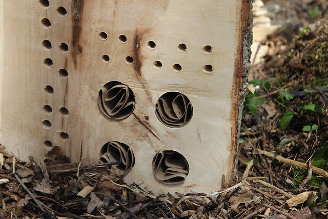 a pollinator house for mother's day.....