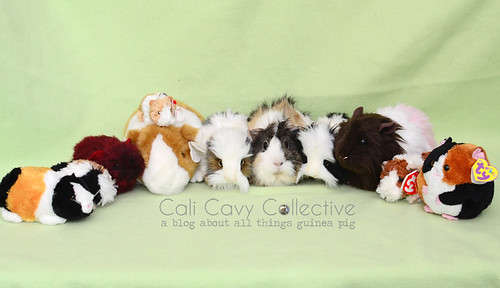 Poof and guinea pig plushies