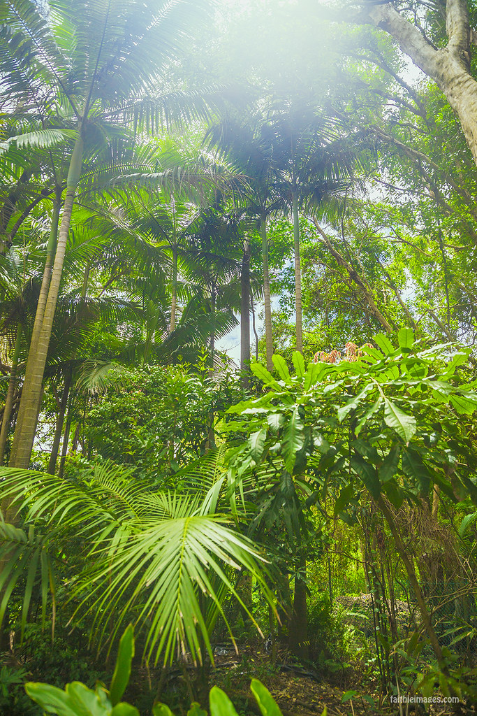 Queensland nature tropical jungle lush