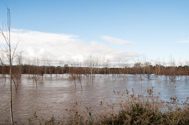 Crecica Ebro Enero 2015-16