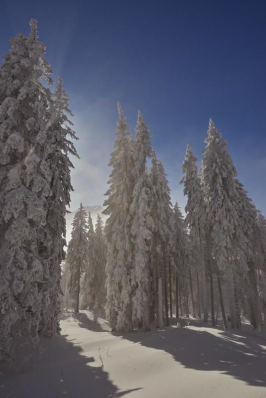 Snow covered trees - Gurnigel