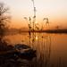 MMM---Misty Monday Morning by betuwefotograaf