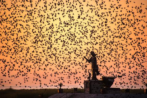 sunrise mexico blackbirds ajijic yellowheaded jesusthefisherman lasemanadeukeculinaryfiesta