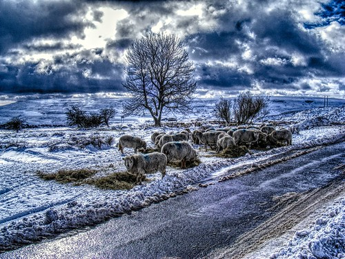 winter snow ice wales sheep farming bestviewedlarge welsh hay gwent blaenavon blaenafon hillfarming torfaen blorenge keeperspond