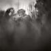 creature by daniel southard