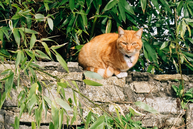 ginger cat sitting on wall