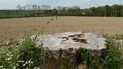 38. Maisoncelles-Pelvey - Photo of Aunay-sur-Odon