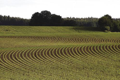 feld field landwirtschaft farming corn mais linien lines landschaft landscape breath taking landscapes