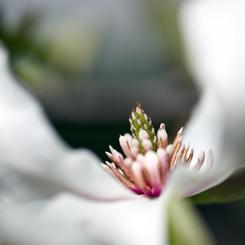 Flora by The Shutterbug Eye™
