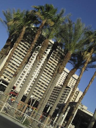 5.19 - Sahara Palms