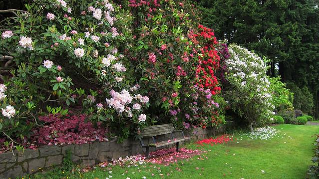 Beautiful Portland Rose Garden at Washington Park