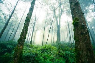 霧中的樹林-4-1226.jpg