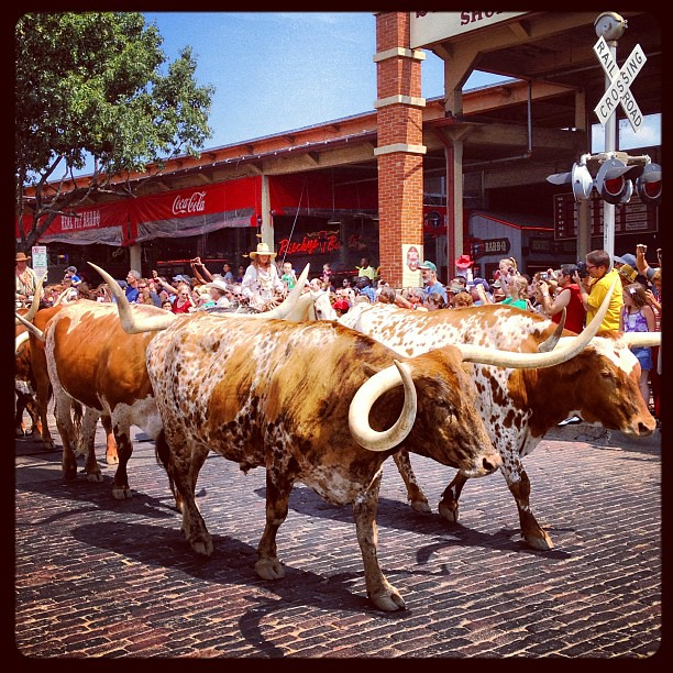 You know you're in Texas when . . . #fortworthstockyards