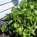 Gardens Galore Vegreville HH