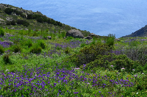 Wild flowers, Teno National Park