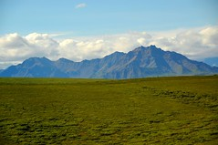 Denali National Park (Bus Tour)