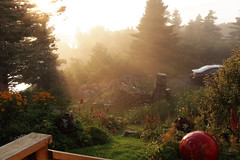 Sunbeams in the Afternoon Garden