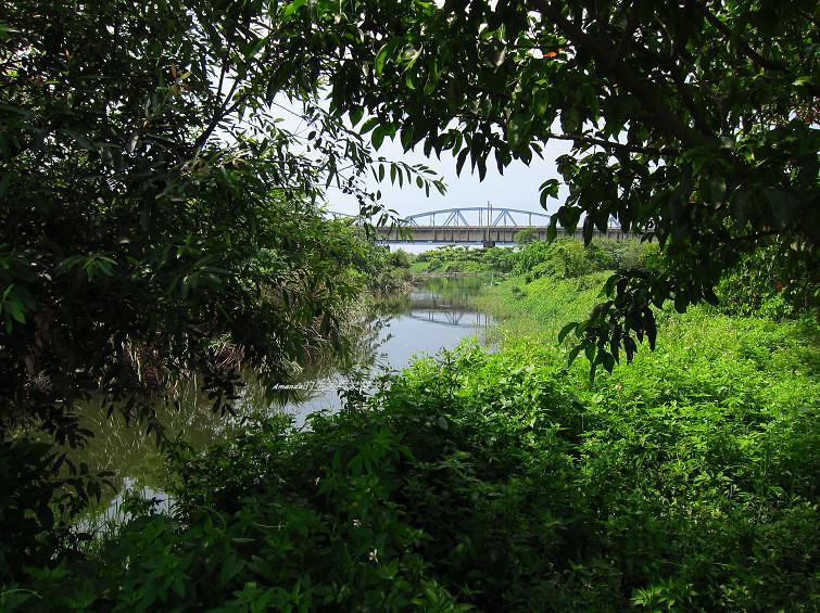 大樹舊鐵橋生態公園 (17)