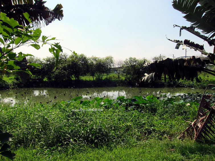 大樹舊鐵橋生態公園 (39)