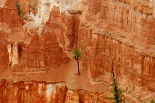 USA-Parque Nacional del Cañón Bryce 35