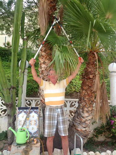 man cutting palm tree by Ginas Pics