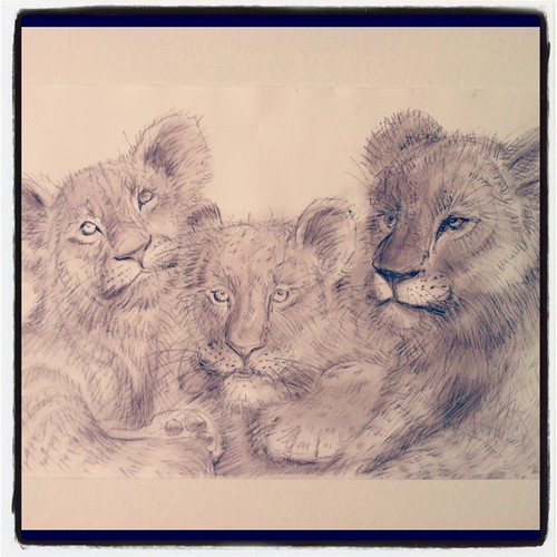 Lion Cups by Sparrow Little