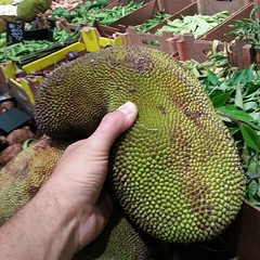 plant, produce, artocarpus, cempedak, fruit, food, durian, jackfruit,