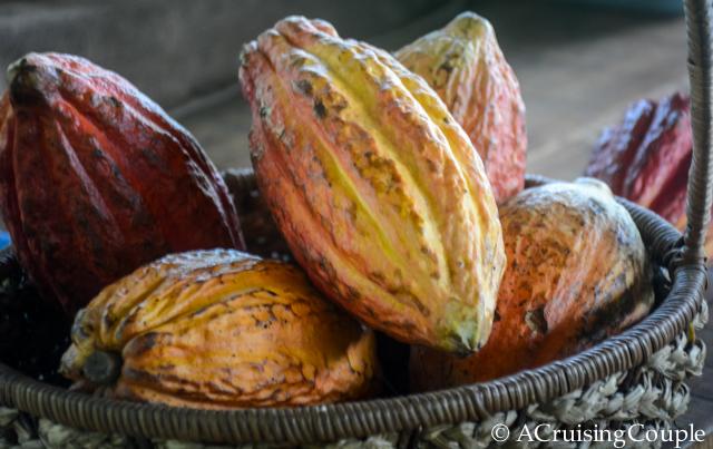 Coco Bean Pod
