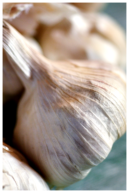 garlic© by Haalo