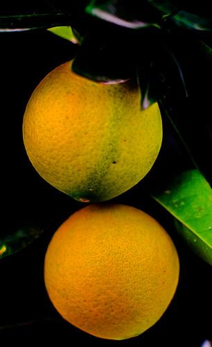 Naranjas 10