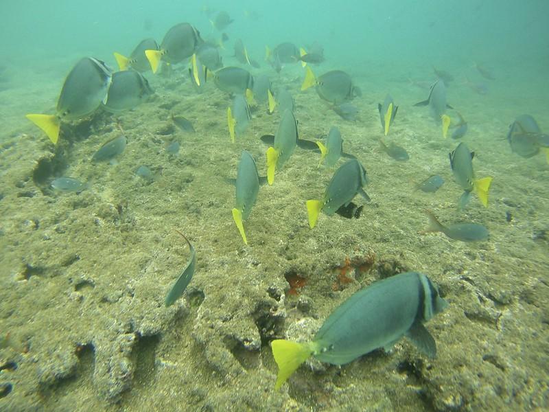 galapagos bartolome 40