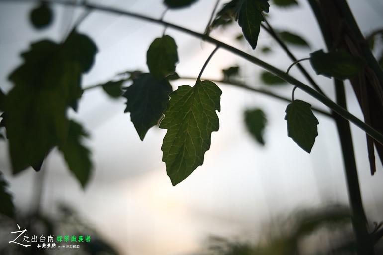 綠翠微農場 (14)