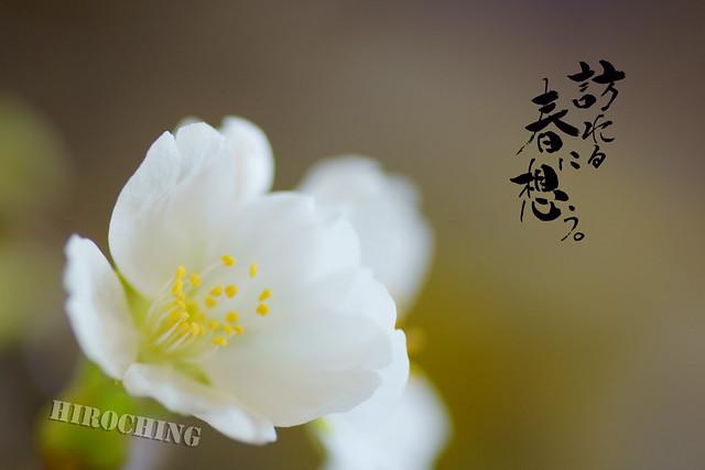 写真_訪れる春に想う2