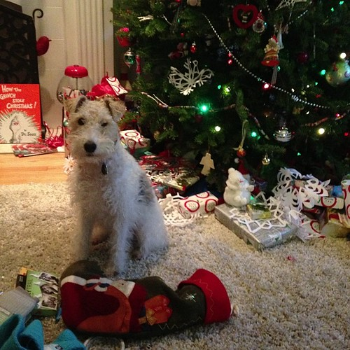 8:00 #hourlyphoto - Piper is watching us unwrap our stockings.