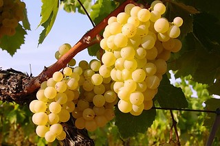 Racimo de uvas.
