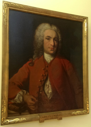 Portrait of Carl Linnaeus.  Original in Linnaean Society of London