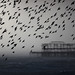 Starling Murmuration and West Pier, in a Hail Storm by Alan MacKenzie