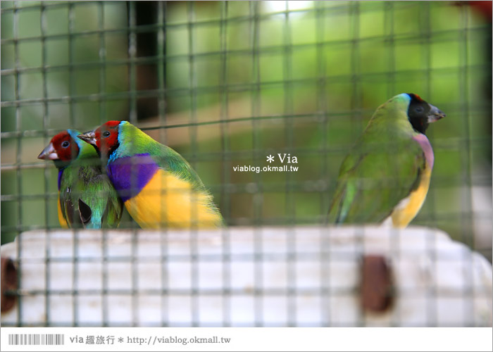 【新竹景點推薦】森林鳥花園~親子旅遊的好去處!在森林裡鳥兒與孩子們的樂園34