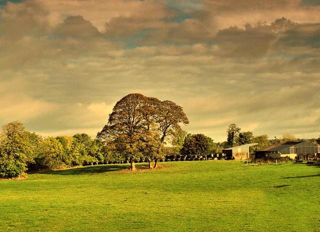 Galway Ireland Farm