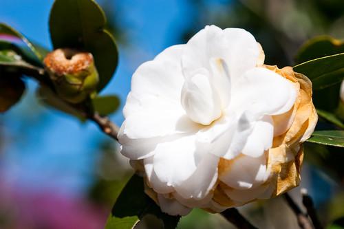 陽明山花卉試驗所-10