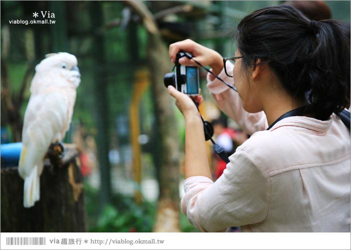 【新竹景點推薦】森林鳥花園~親子旅遊的好去處!在森林裡鳥兒與孩子們的樂園50