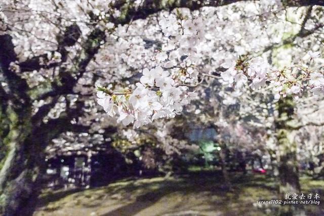 20140327山陽D2熊本-1130343